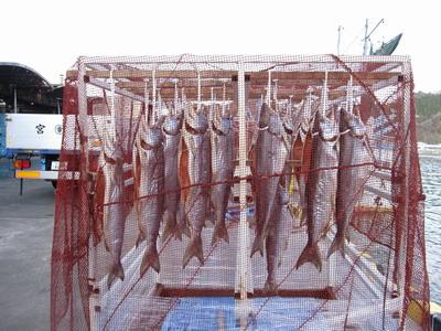 IMG_2803新巻鮭