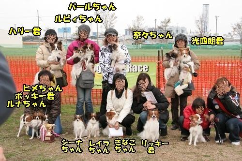 パピヨン限定戦参加者1