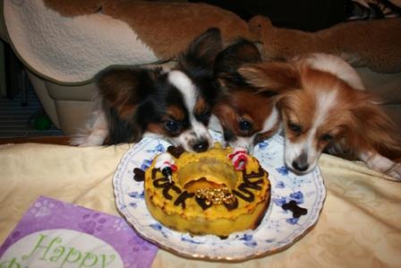 2歳のお誕生日 デューク