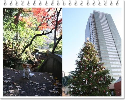 秋とクリスマス