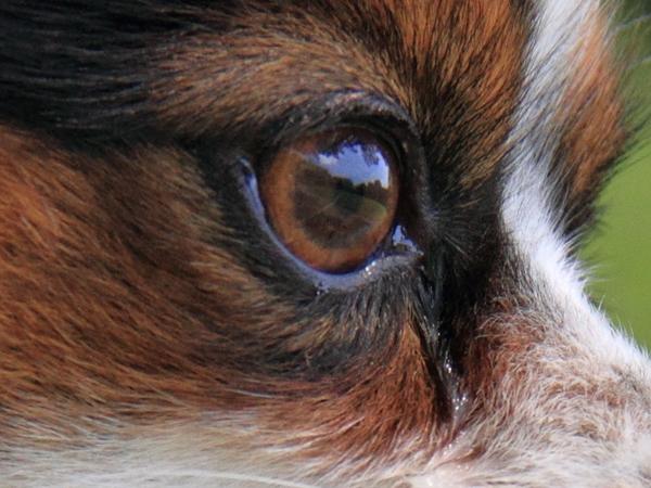 デュークの目