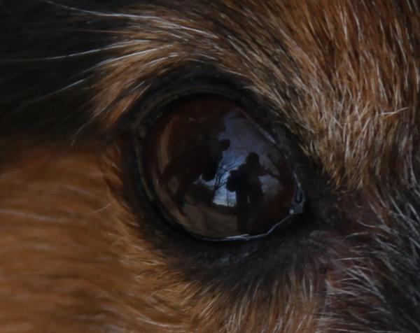 ルウ君の目