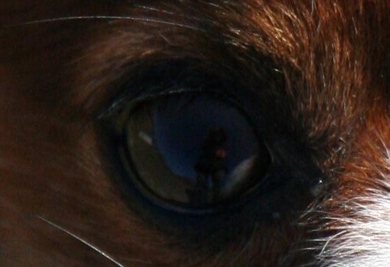 ラックの目