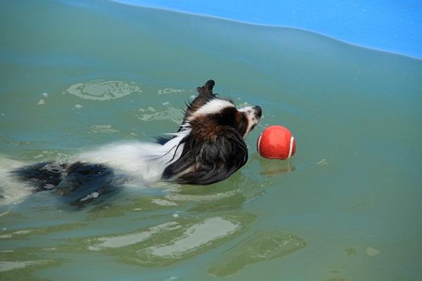 プール ボール2