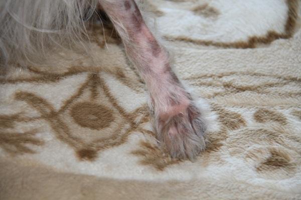 ひょう柄の足