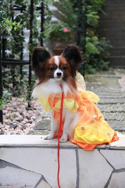 ラックオレンジドレス