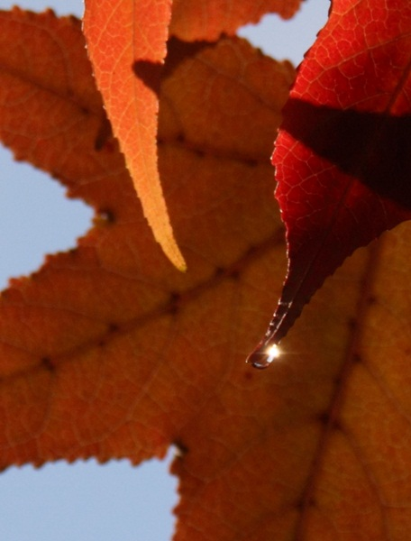 葉っぱの中の 太陽