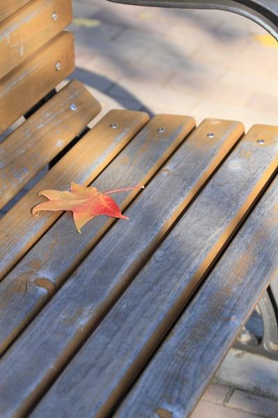 ベンチと葉っぱ