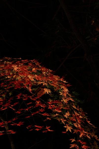 ライトアップ紅葉3