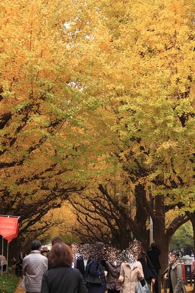 銀杏並木3