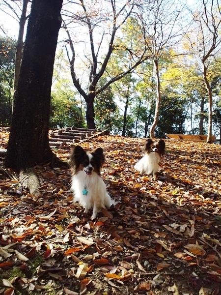 散歩公園3