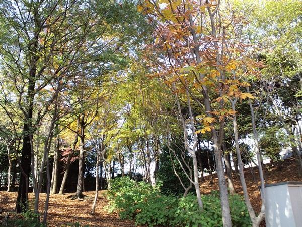 散歩公園1