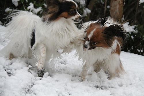 雪ではしゃぐ1