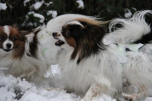 雪ではしゃぐ2