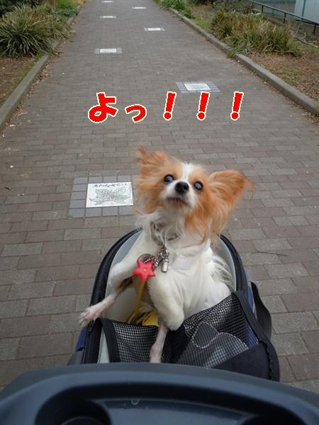 姫の散歩5
