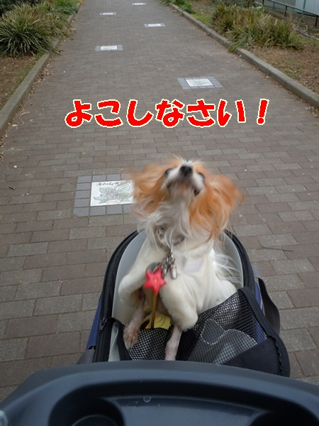 姫の散歩4