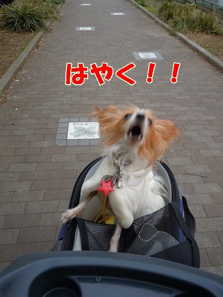 姫の散歩3