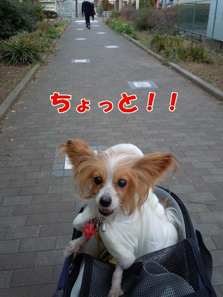 姫の散歩2