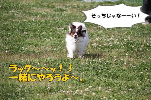 IMG_7526.jpg