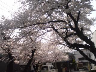 20100405-6.jpg