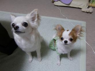 同じ犬種なんだけどな~