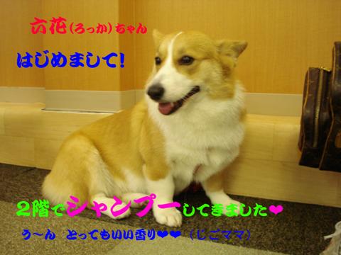 六花(ろっか)