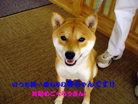 DSC05349.jpg