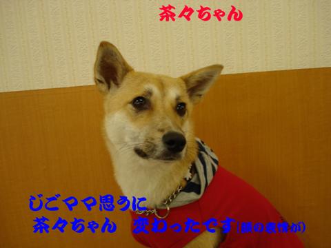 DSC05398.jpg