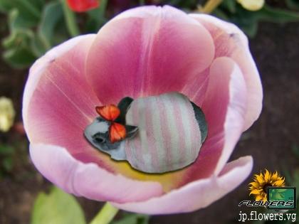 花メンフィス