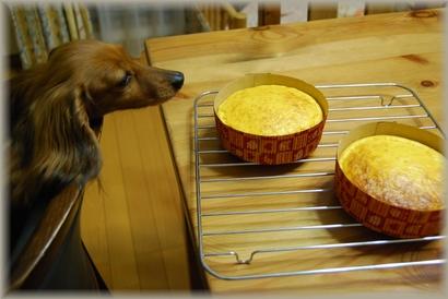 ケーキが焼けたょ
