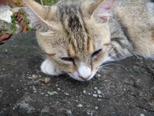 猫IMG0003