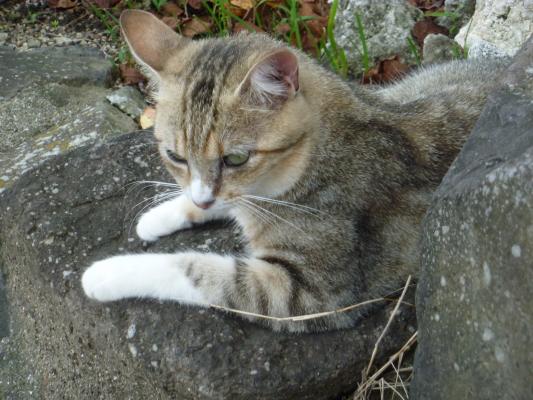 猫IMG0001