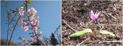 既に春です