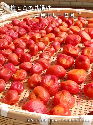 梅と杏の共漬け 土用干し一日目