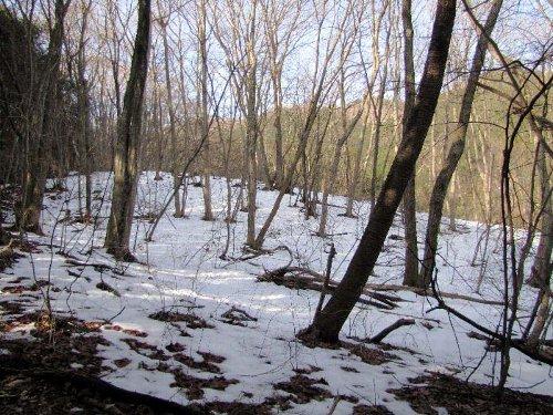 3 登り道の林