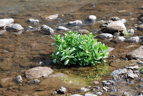 水の中の草