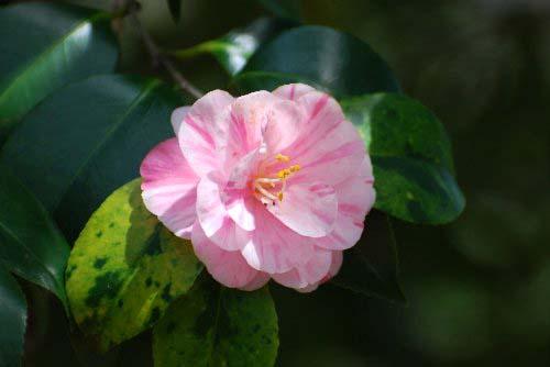100419 小桜