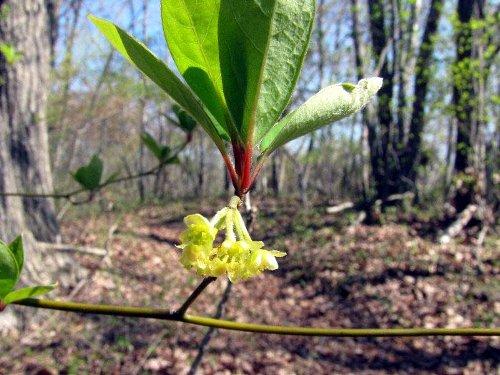 7 木の花
