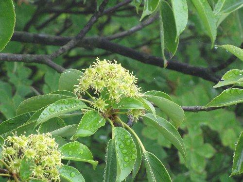 8 木の花