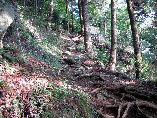8 登り木の根道