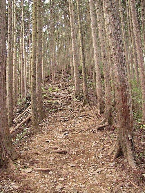 3 登りの道