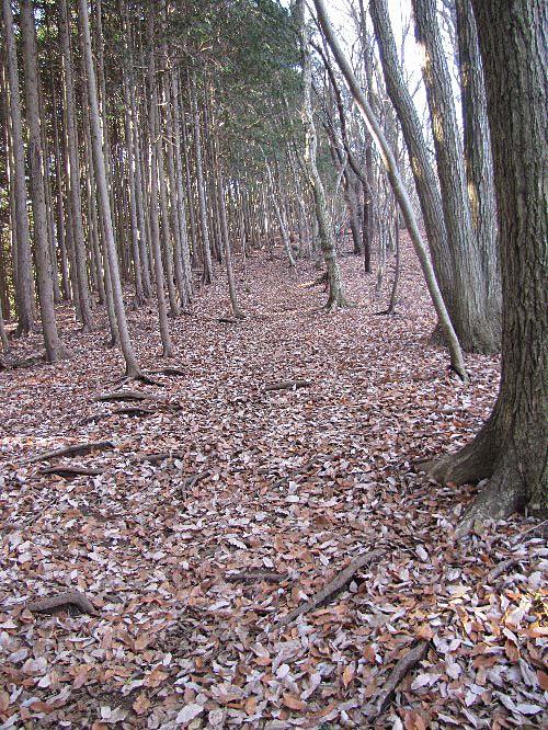 2 木の葉道