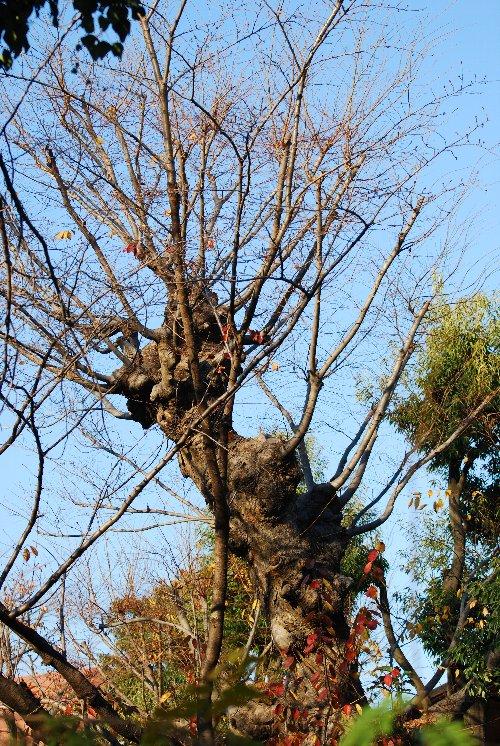 101213 何の木