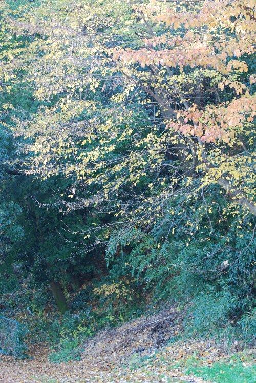 101218 落ち葉の木