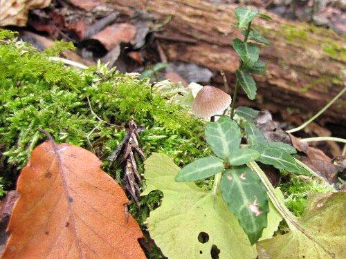 3 きのこ、落ち葉の寄せ植え