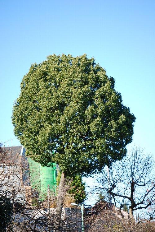 101222 木 おむすび
