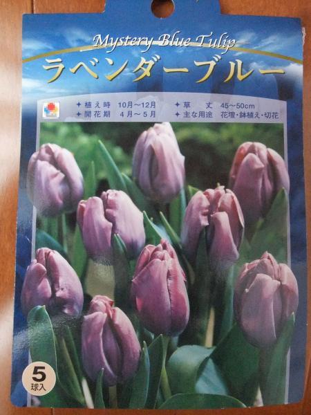繝舌う繧ェ繝ャ繝・ヨ繝薙Η繝シ繝・ぅ繝シ_convert_20101012171847