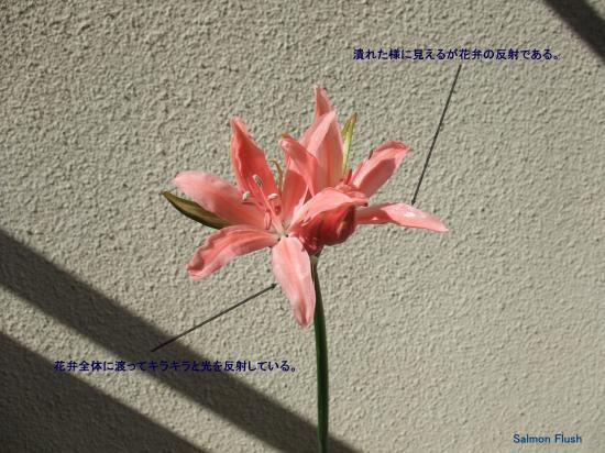 DSCF6970-6_convert_20101110143241.jpg