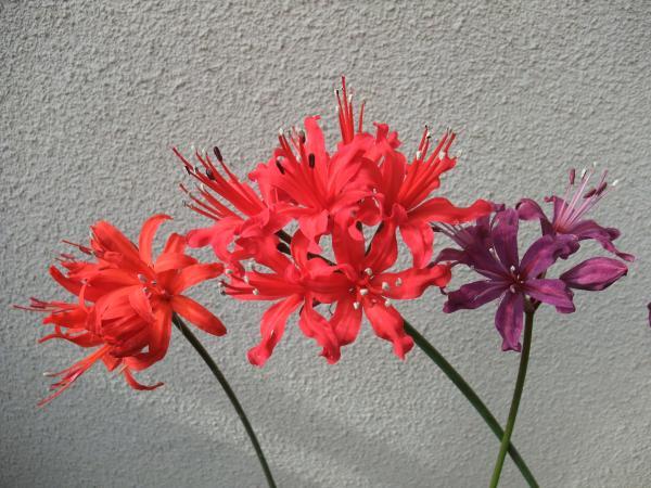 DSCF7221_convert_20101113112039.jpg