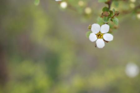 ちいさい花